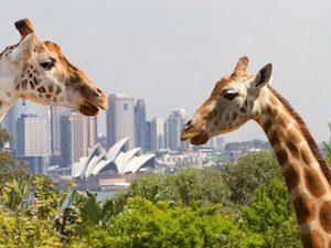 タロンガ動物園割引チケット